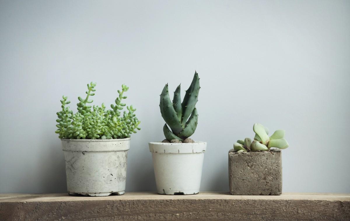 Plantes vertes bureaux qualité de l'air Geolocaux