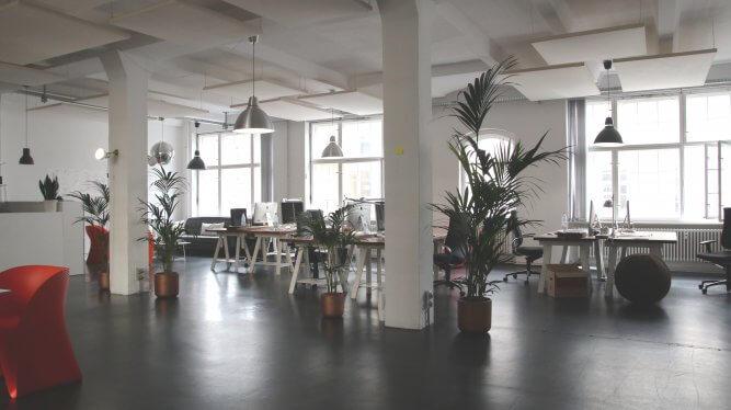 Plantes vertes et productivité au bureau